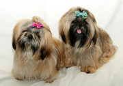 Professional Dog Groomers Services in Las Vegas